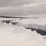 Cattle that were snowed in at Coolamine Plains in July 1964 makeing their way out along Long plain