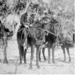 Harold Walsh and Bill Harris setting off to Rules Point with a load of rabbit skins. C1940